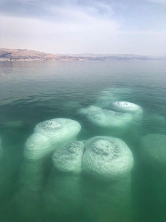 פטריות מלח בים המלח