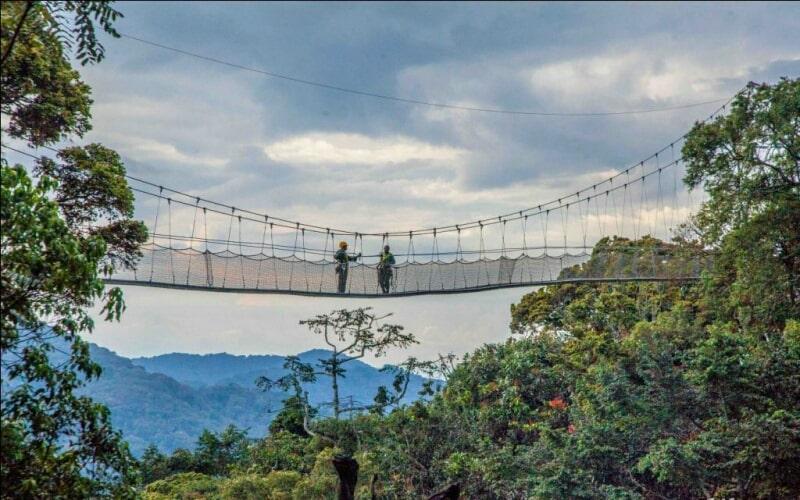 הגשר התלוי בפארק הלאומי ניונגווה רואנדה