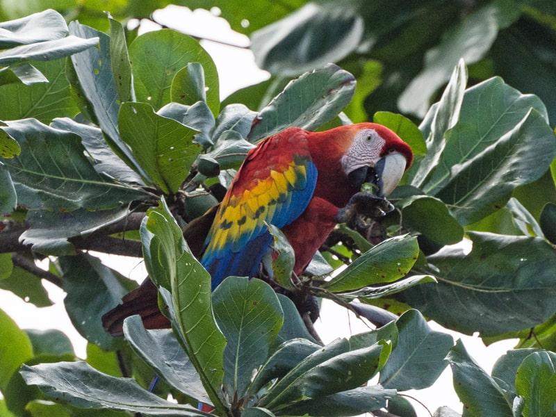 הפארק הלאומי טורטוגרו Tortuguero National Park קוסטה ריקה